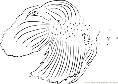 coloring pages betta fish fish to color kids coloring betta fish coloring book