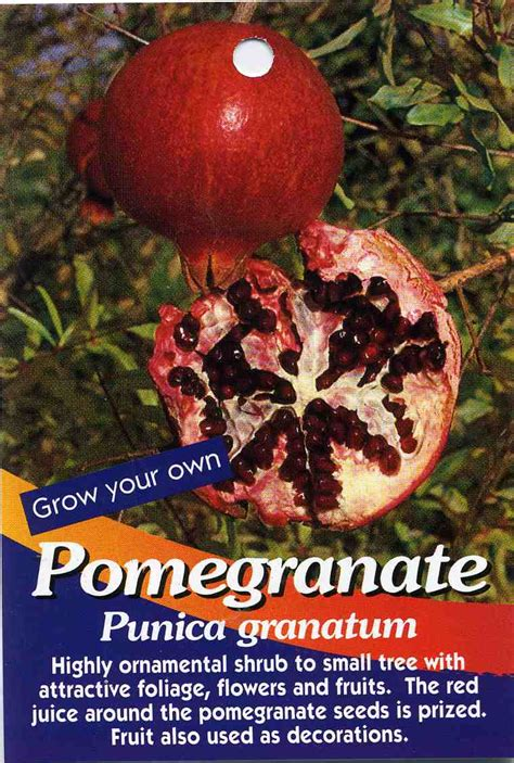 Hanging Decorations For Home pomegranate tree punica granatum highly ornamental
