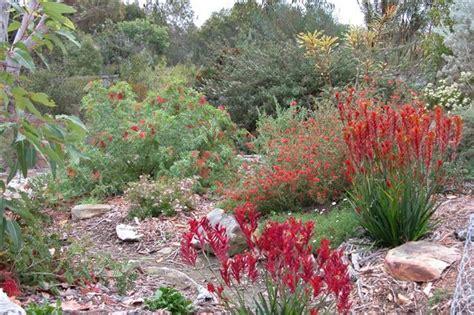 australian garden ideas australian garden design ideas search my