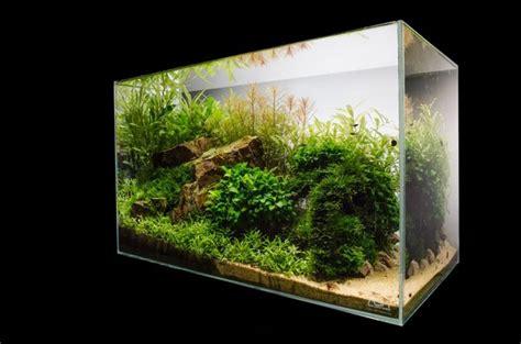 Aquascape Design Principles | aquascape basic principles and elements of landscaping