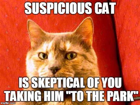 Suspicious Meme - suspicious cat meme imgflip