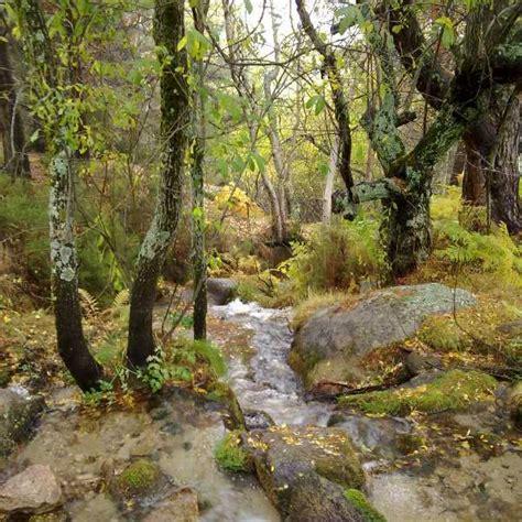 imagenes de paisajes naturales bosques bosques paisajes naturales y salud 161 sum 233 rgete en el bosque