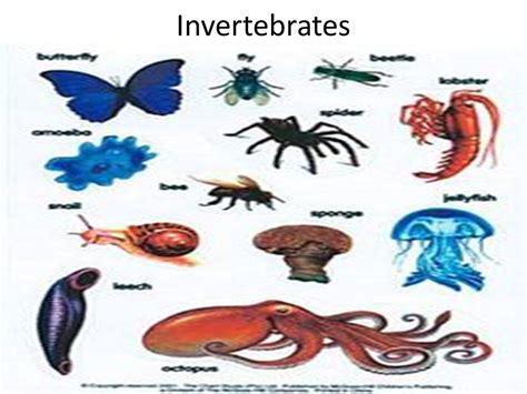 Invertebrates. - ppt download Invertebrates Animals Names