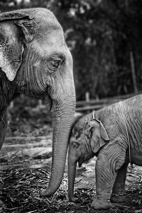 cute pictures of baby animals getting parents care