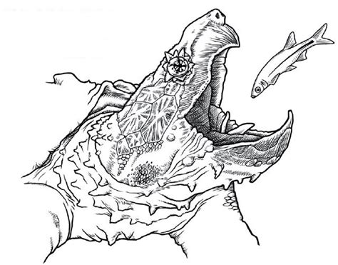 coloring pages snapping turtle education