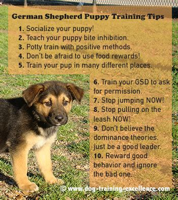dog house training methods 10 best german shepherd puppy training tips