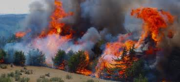 California fire map san francisco the feed