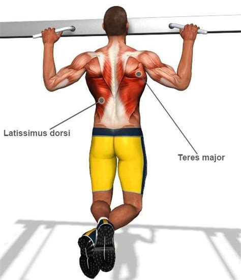 best lat exercises lat workouts best back and lat workout and lower and