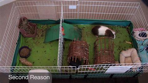 fleece bedding for guinea pigs guinea pig fleece vs carefresh cage liner youtube