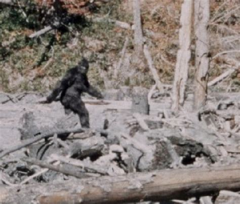 Bigfoot Search Featured Question With Forrest Advice For Bigfoot