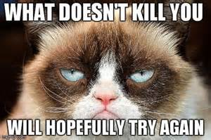 Grumpy Cat Monday Meme - 21 grumpy cat memes you can relate to every monday of your