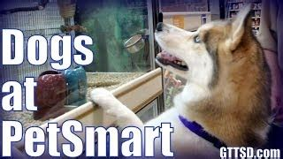 how much do puppy cost at petsmart how much do huskies shed furminator siberian husky заливка свяжка