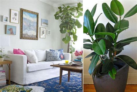 best plants for west side of house 5 favorite houseplants myhome design remodeling
