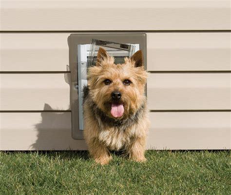 Dog Doors   PetSafe Pet Doors for Dogs & Cats