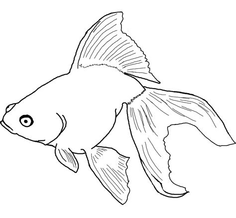 coloring pages fish free printable goldfish coloring pages for kids