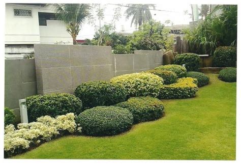 front yard ideas landscaping vines