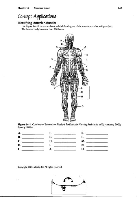 Skeletal Tissue Worksheet by 1000 Images About Anatomy On Jointed