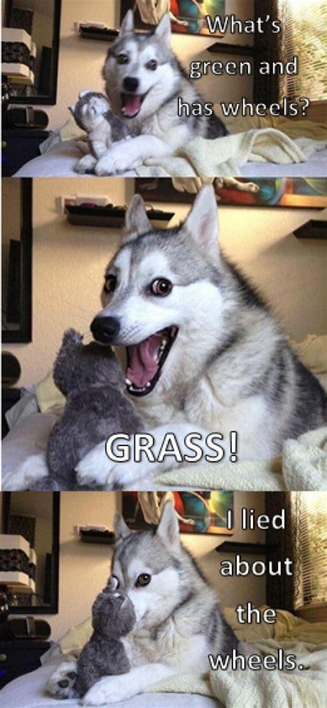 Dog Jokes Meme - happy husky memes image memes at relatably com