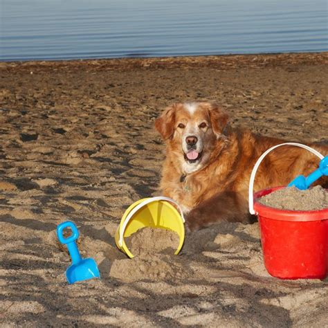 friendly hotels city md pet friendly oceanfront lodging in city maryland usa today