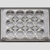 Cell Culture Plate | 800 x 552 jpeg 85kB
