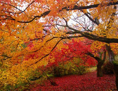 why fall is the best season reasons why autumn is the best season holidappy