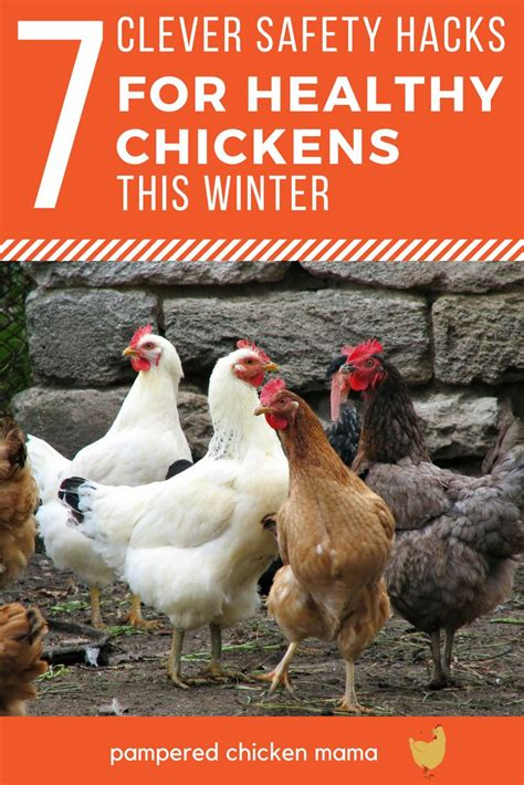 heat l for chickens in winter 3390 best chickens images on pinterest backyard chickens
