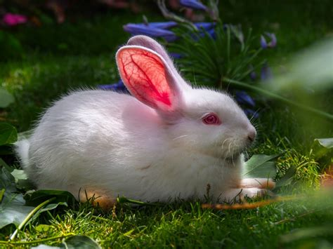 cute rabbit hd wallpaper lovely best rabbit wallpapers images photos and pictures