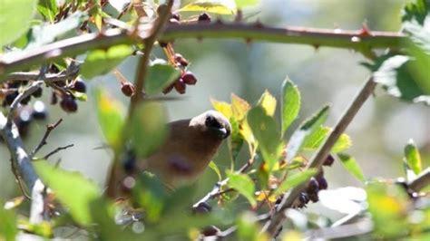 Elstern Vertreiben Im Garten by V 246 Gel Obstb 228 Umen Verscheuchen Frag Mutti