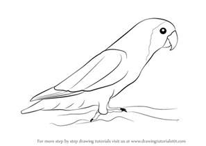 how to draw doodle birds learn how to draw birds birds step by step