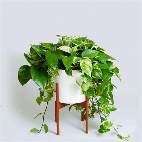 Plante Design D Interieur by Plantes Vertes Int 233 Rieur Faciles 224 Entretenir S 233 Lection