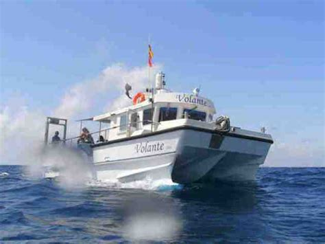 fishing boat trips torrevieja sea fishing torrevieja suit requirements 187 spain info