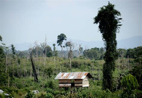 Hutte Sur Pilotis by En Indon 233 Sie Des Tribus Victimes De La D 233 Forestation Se