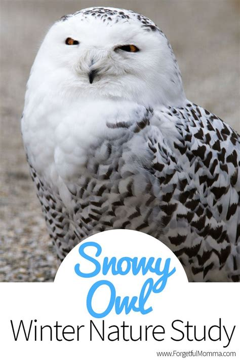Canon Paper Craft Snowy Owl - 72 best owls images on easy crafts