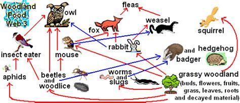monkey food chain diagram fox food chain diagram memes