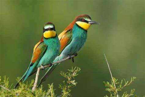 las aves exticas mi 10 aves ex 243 ticas sorprendentes del mundo notas la biogu 237 a
