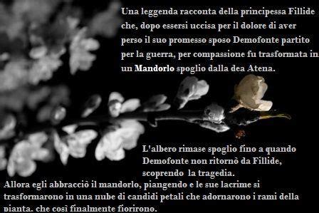 trama il linguaggio segreto dei fiori il fiore della speranza il linguaggio segreto dei fiori