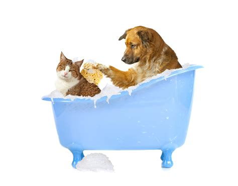 Dog Pet Grooming Bath Tub Dog Breeds Picture