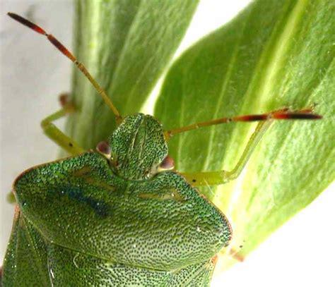 die grüne versicherungskarte artenschutz insekten 220 bersicht