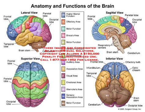 sections and functions of the brain brain jack image brain diagram and functions