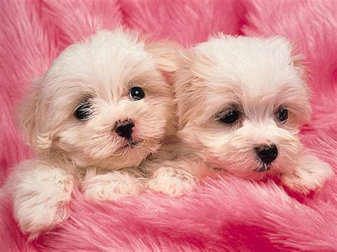 pink puppies pink puppies photo by se7en madness photobucket