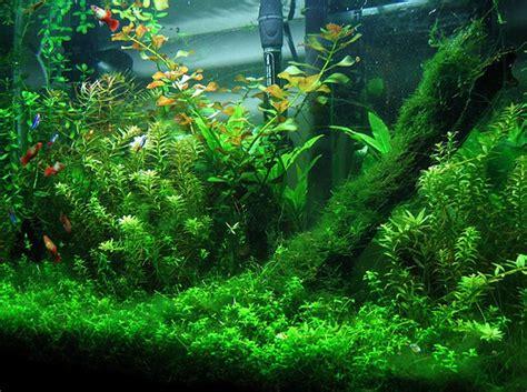 aquascaping tips how to care for aquarium plants