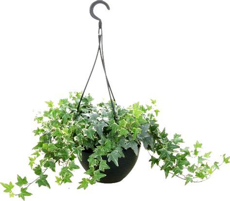 imagenes png vegetacion zoom dise 209 o y fotografia plantas colgantes para tus