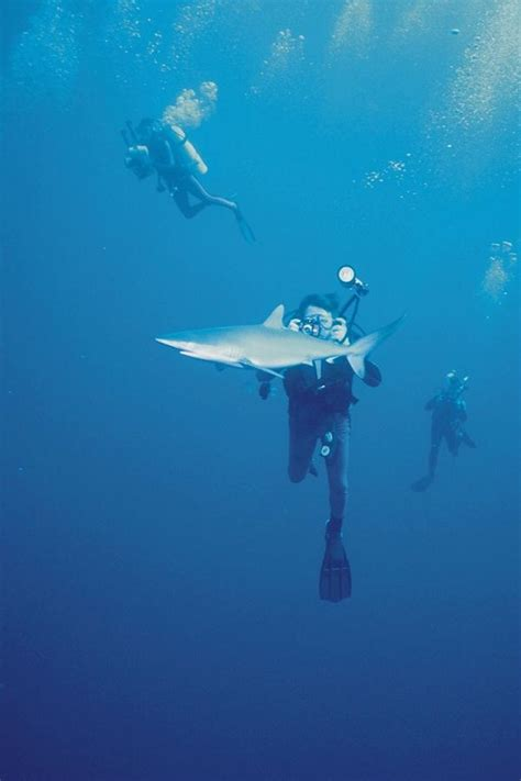 Shadow In The Sea shadows in the sea sharks