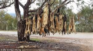 Doggie From Tree by Farmers Shoot Dogs And String The Carcasses
