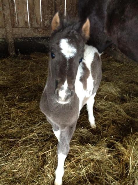 Cute Adorable Horse