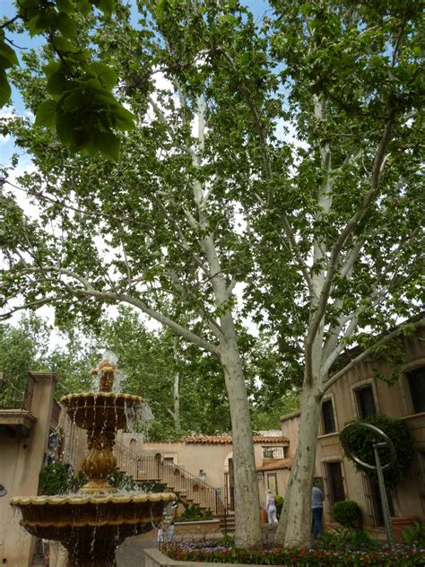 best shade tree for backyard 100 best shade tree for backyard backyard privacy