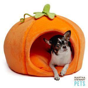 martha stewart dog bed cats cas and pumpkins on pinterest