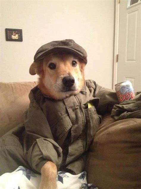 dogs wearing hats dogs wearing hats dogswearinghats