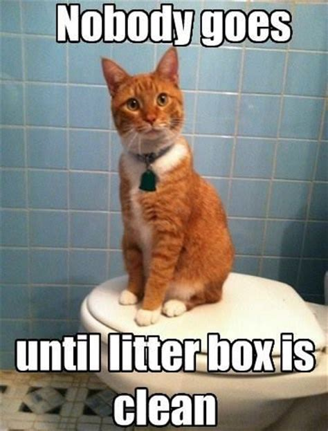 Clean Cat Memes - too funny and too true my cats sit and wait while you