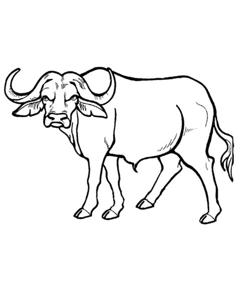coloring sheets african animals african animals coloring pages